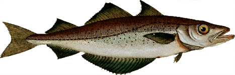 Peixe Polaca
